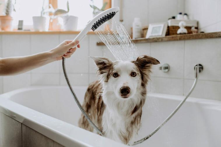 Wie 3D-Druck bei Entwicklung einer Hunde-gerechten Duschbrause half